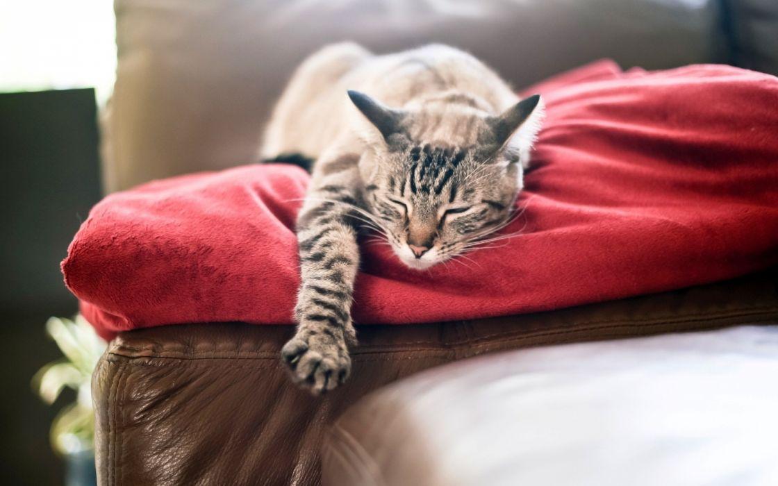 cat cats feline sleep sleeping lazy d wallpaper