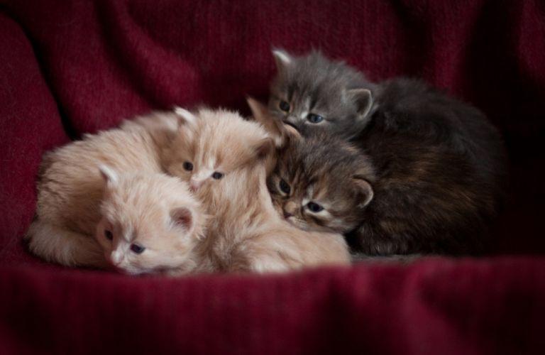 Cat cute kitten baby wallpaper