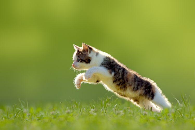 cat cats feline kitten baby y wallpaper