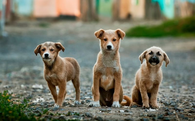 dog dogs puppy baby puppies s wallpaper