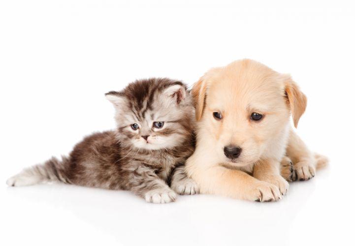 Dog Cat Puppy Kittens Animals baby wallpaper