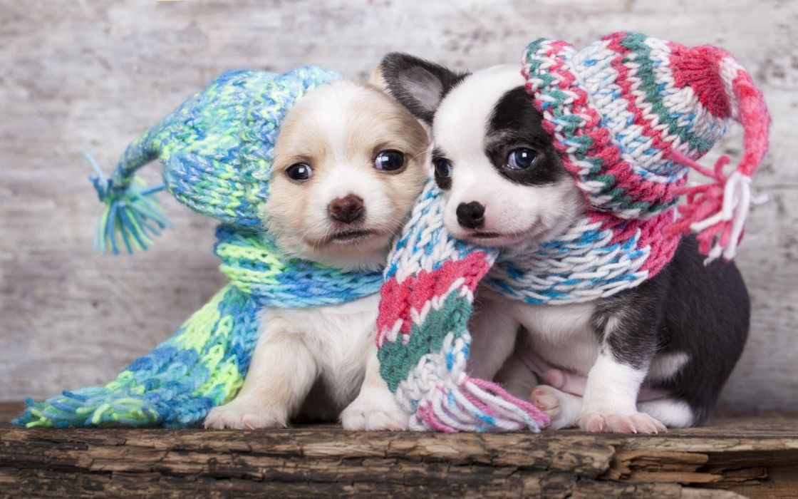 dog dogs puppy baby puppies e wallpaper