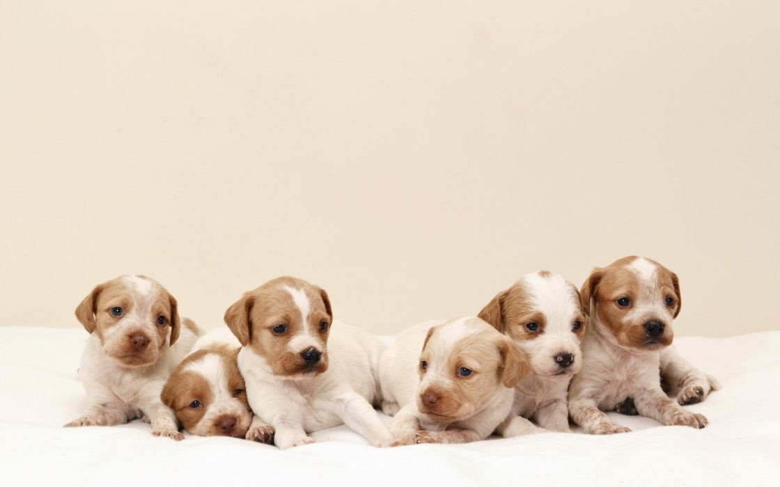 dog dogs puppy baby puppies ds wallpaper