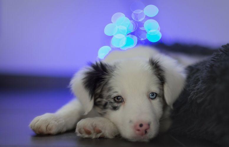 Dog puppy cute wallpaper