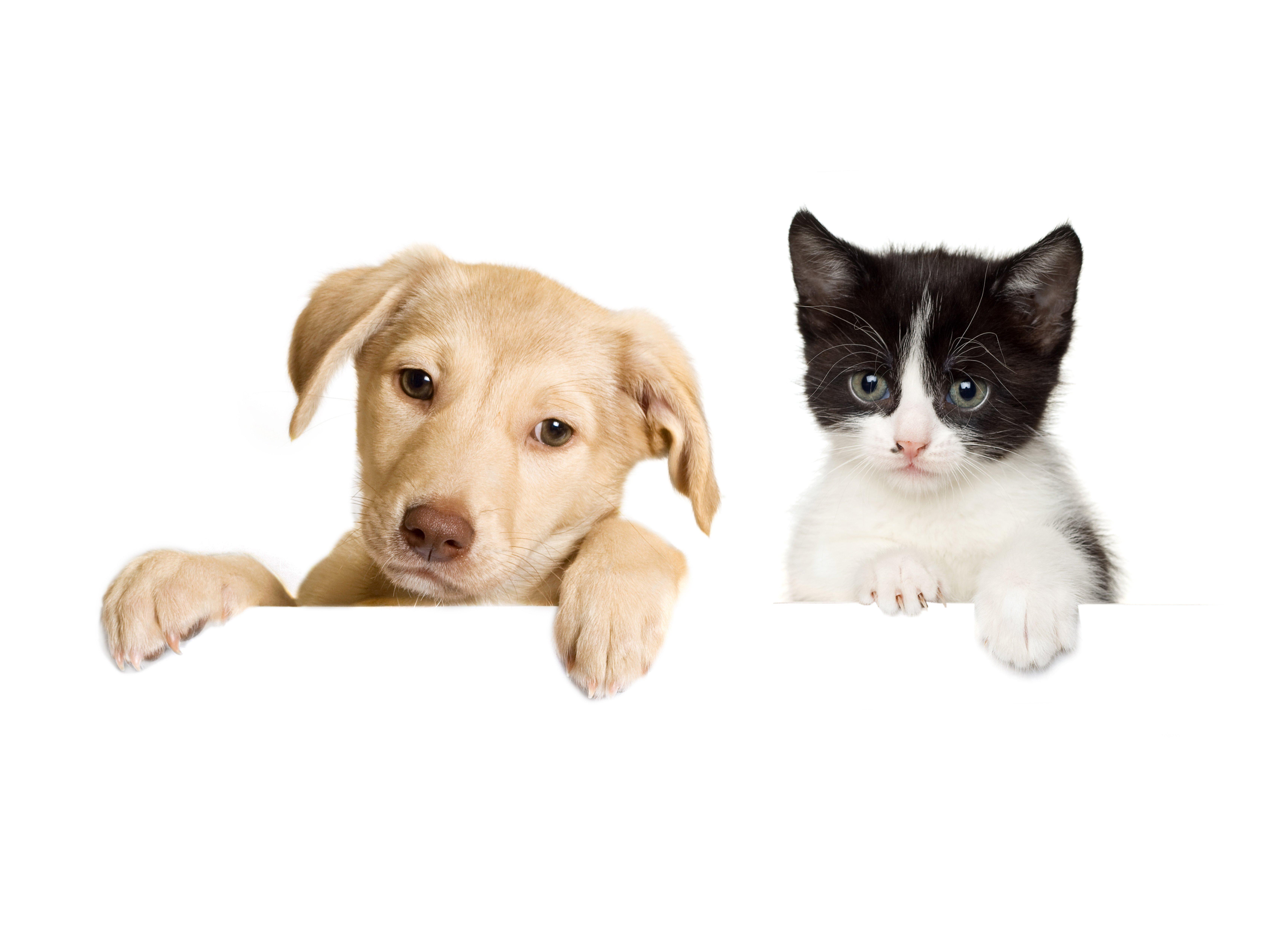 dogs cats puppy kitten baby wallpaper 6836x4942 649226