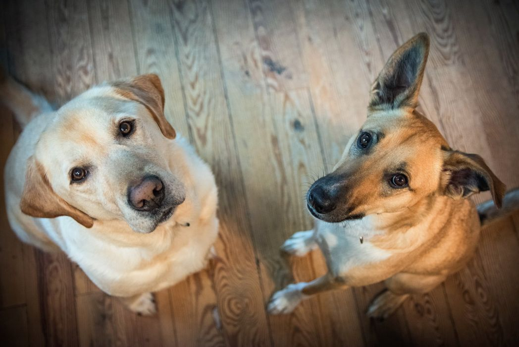 dog dogs b wallpaper