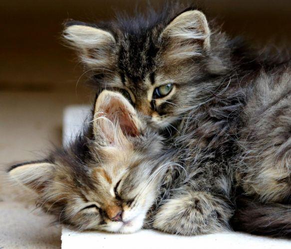 Kitten cat animals hug sleep cute eyes baby wallpaper