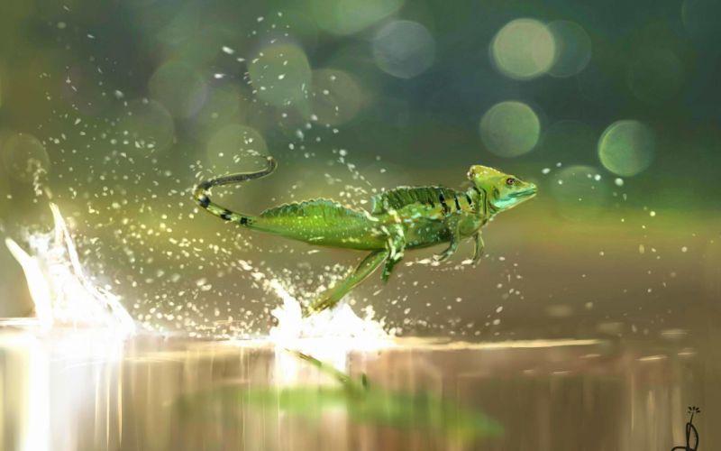 lizard reptile drops s wallpaper