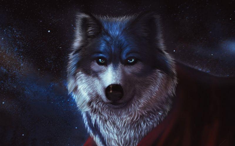 wolf wolves predator carnivore artwork d wallpaper