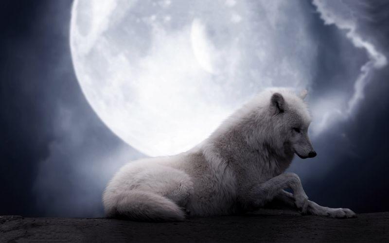 wolf wolves predator carnivore artwork moon d wallpaper