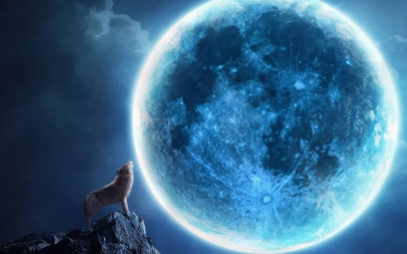 wolf wolves predator carnivore artwork space moon night artwork f wallpaper