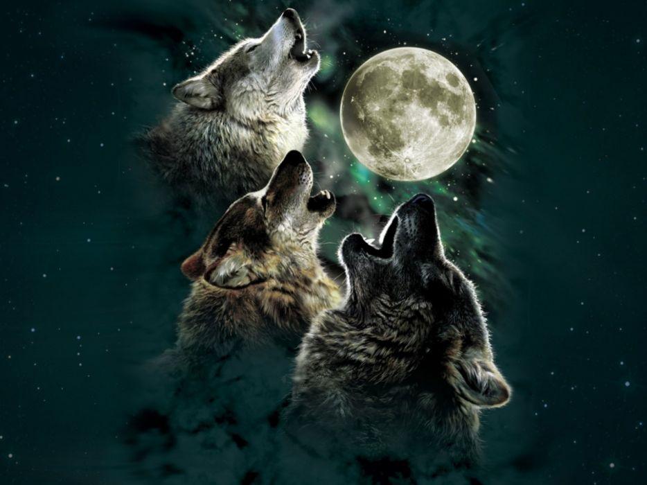 wolf wolves predator carnivore night moon stars howl artwork f wallpaper