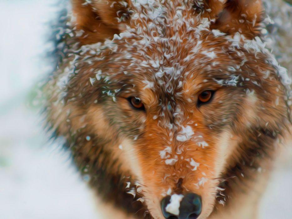 wolf wolves predator carnivore winter snow artwork f wallpaper