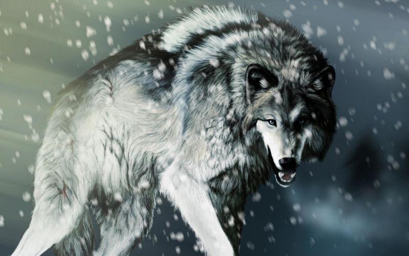 wolf wolves predator carnivore winter snow artwork t wallpaper
