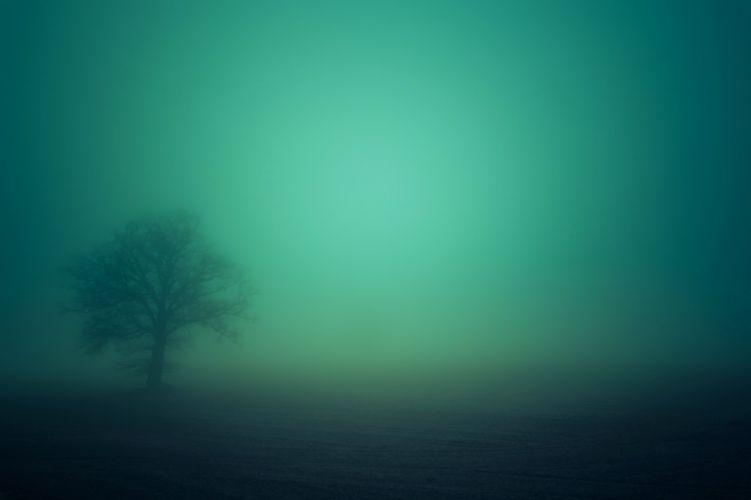 landscapes nature earth trees fog morning wallpaper