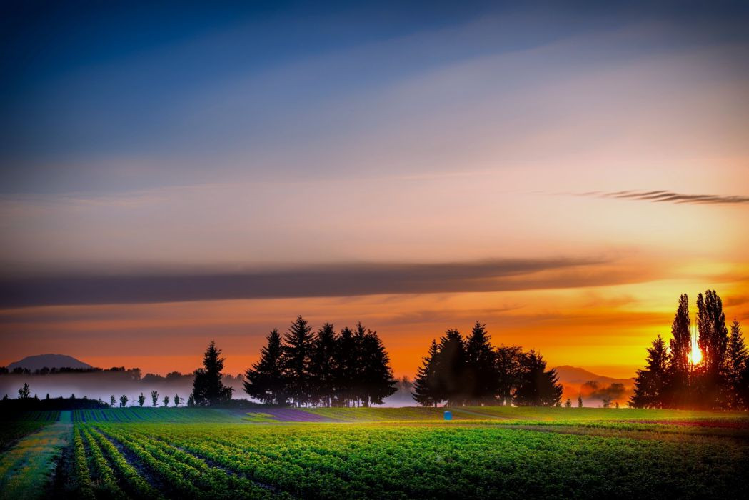 fields trees plants sunrise nature fog countryside sky clouds earth Agriculture wallpaper