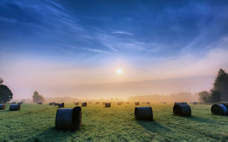 sky clouds sunny morning sunrise fields grass fog nature earth landscapes countryside trees wallpaper