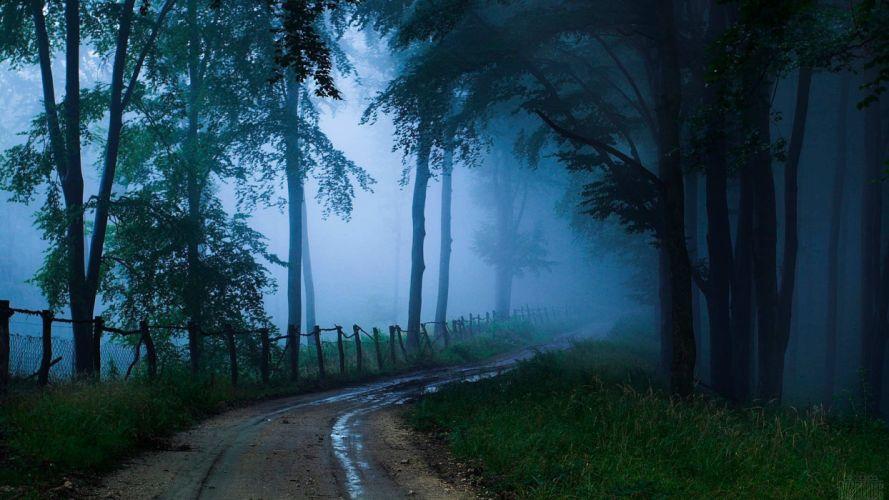landscape nature tree forest woods path fog wallpaper