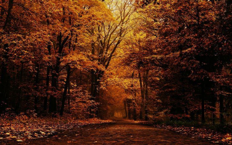 landscape nature tree forest woods autumn wallpaper