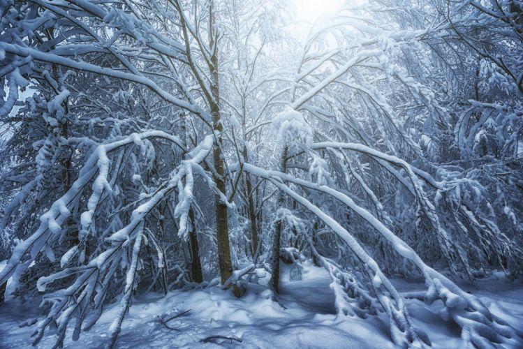 landscape nature tree forest woods winter wallpaper