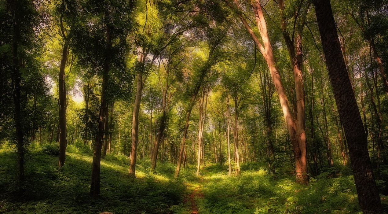 landscape nature tree forest woods wallpaper