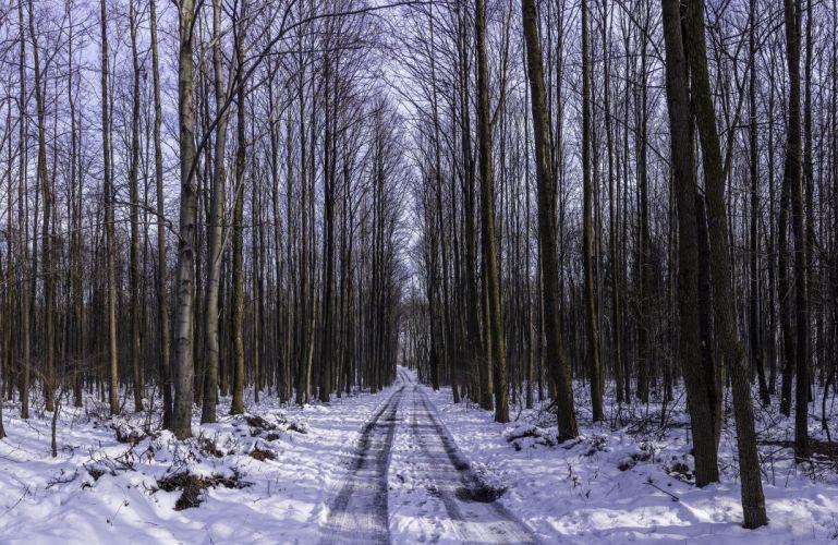 landscape nature tree forest woods winter road wallpaper