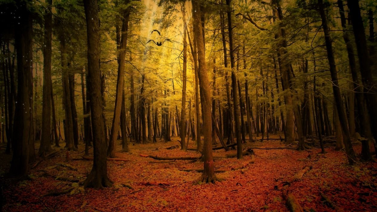 landscape nature tree forest woods autumn wallpaper