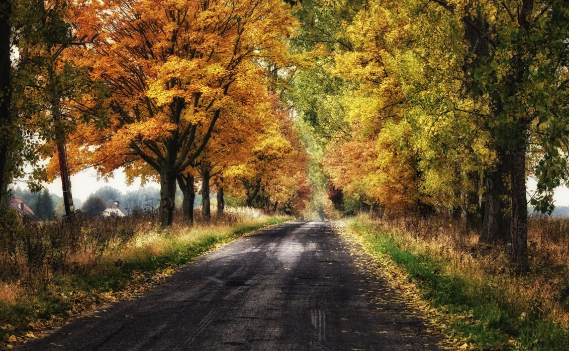 landscape nature tree forest woods autumn road path wallpaper