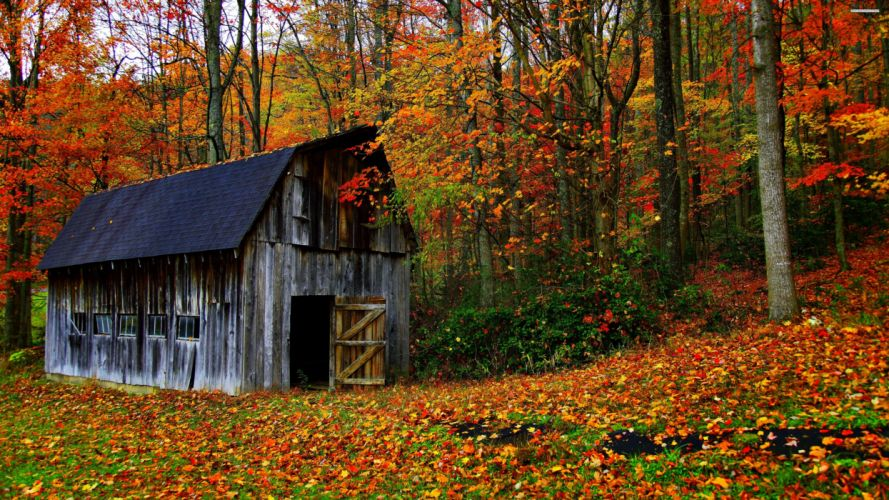 house autumn leaves trees jungle forest countryside huts landscapes nature earth colors wallpaper