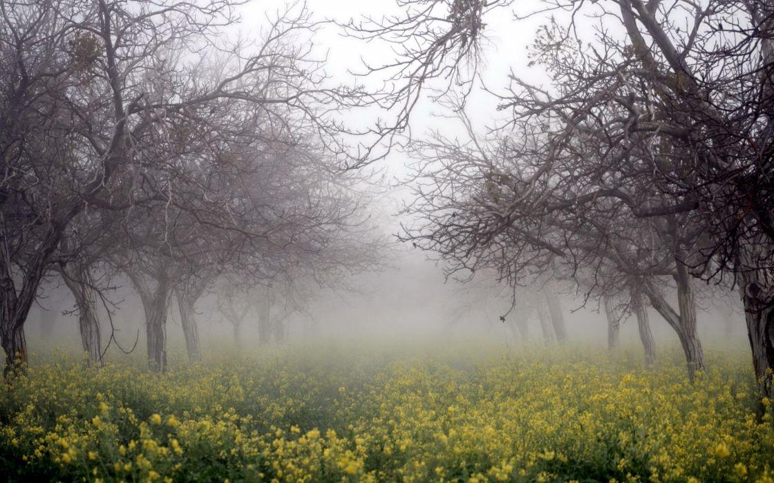 fog nature rape trees forest flower yellow wallpaper