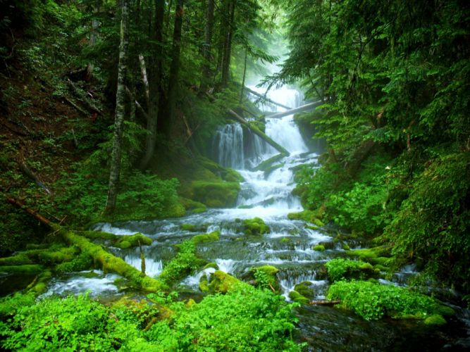 landscape nature tree forest woods river waterfall wallpaper