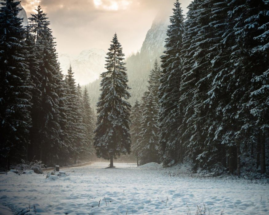 landscape nature tree forest woods winter wallpaper