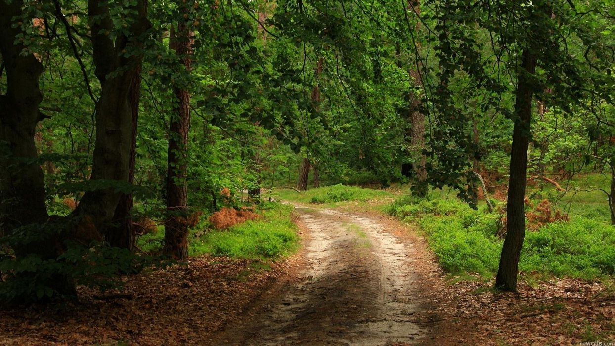 landscape nature tree forest woods path road wallpaper