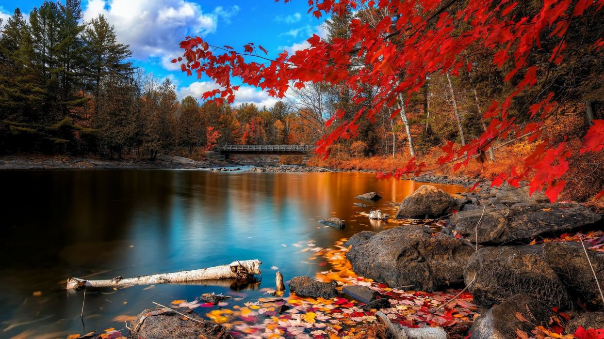 landscape nature tree forest woods autumn lake wallpaper
