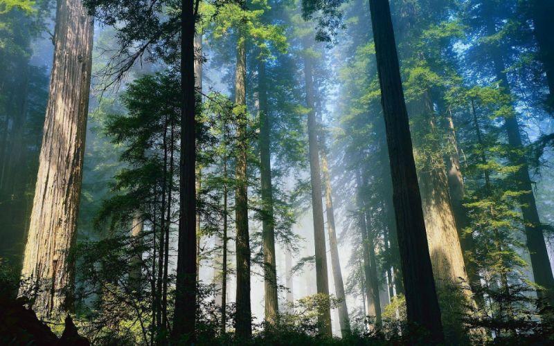 landscape nature tree forest woods wallpaper