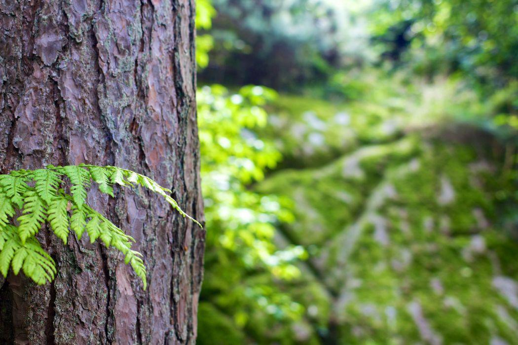 landscape nature tree forest woods leaf leaves wallpaper