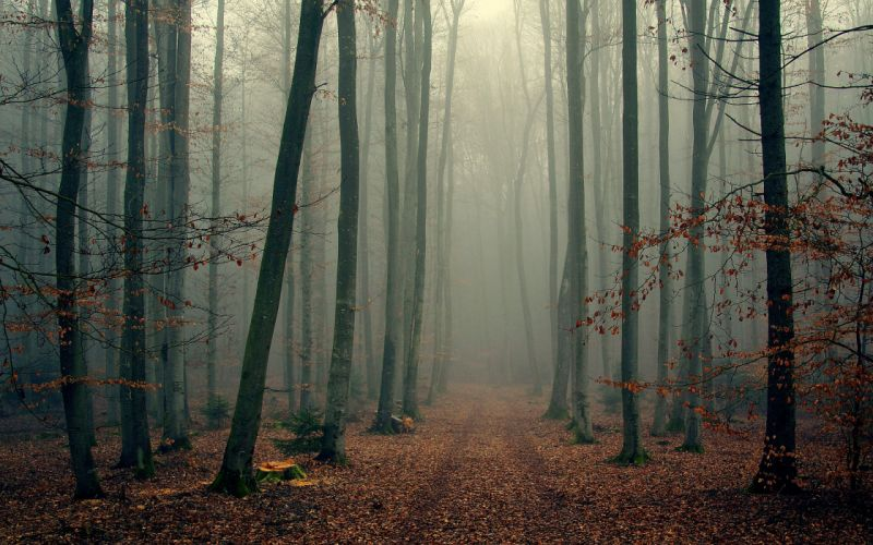 landscape nature tree forest woods autumn fog wallpaper