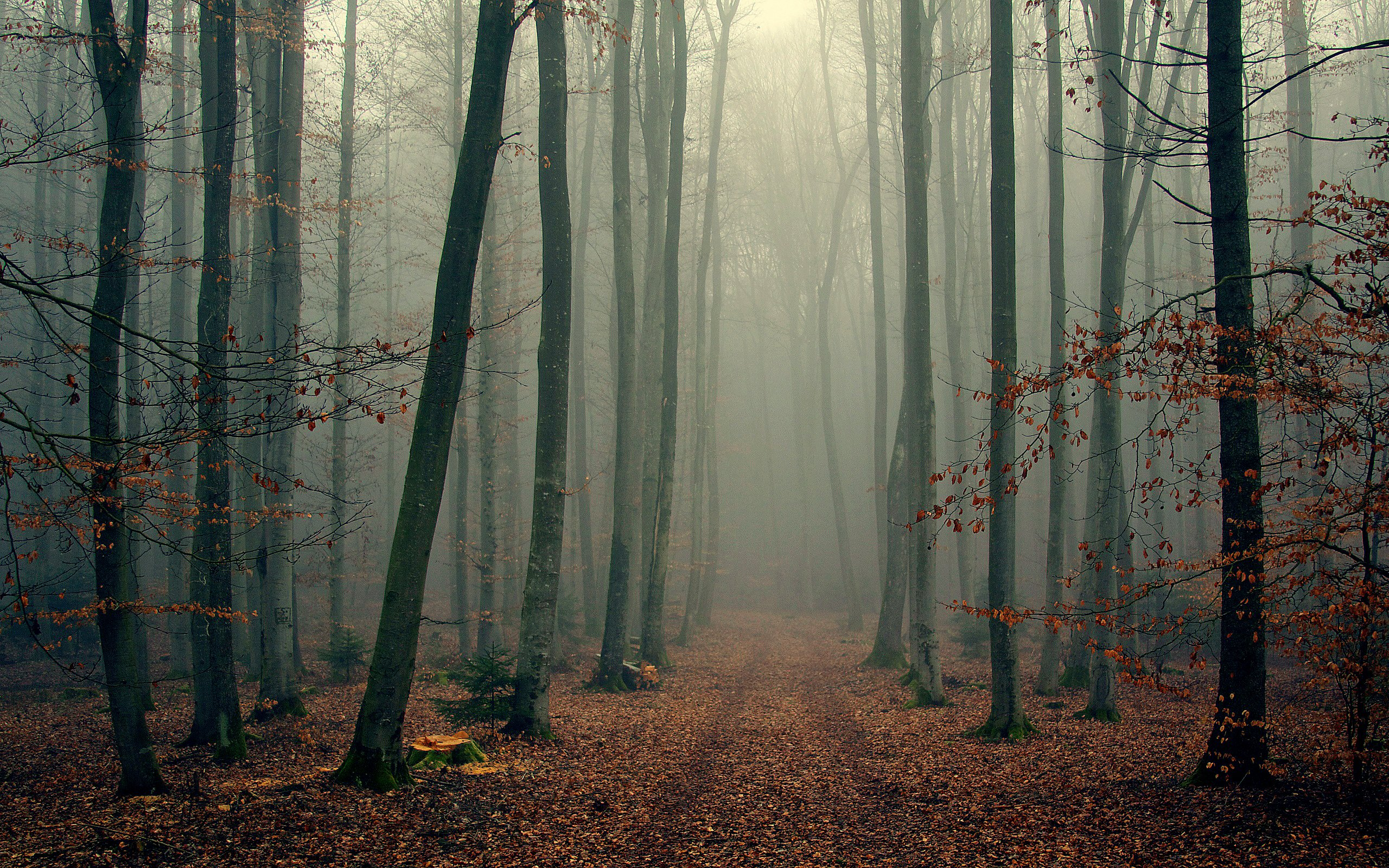 landscape nature tree forest woods autumn fog wallpaper 2560x1600