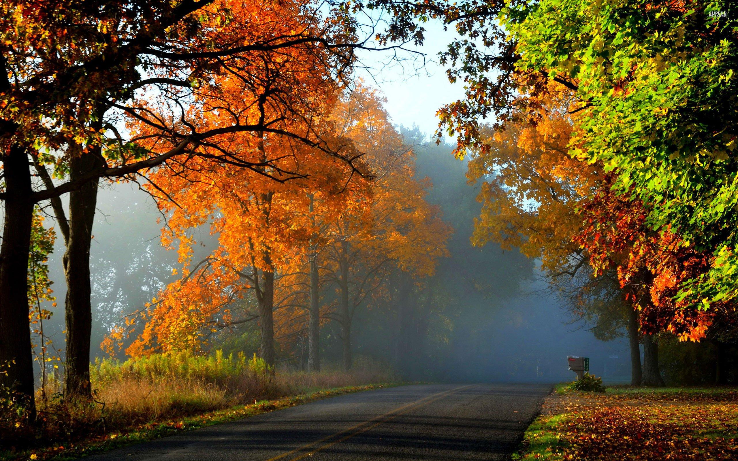 Landscape nature tree forest woods autumn road path ...