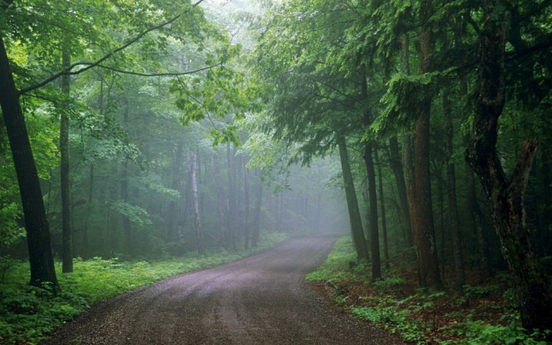 landscape nature tree forest woods road path wallpaper