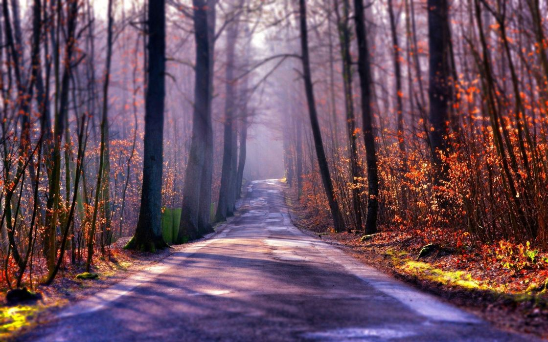 landscape nature tree forest woods autumn path road wallpaper