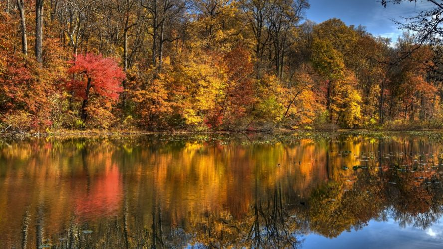 landscape nature tree forest woods autumn lake reflection wallpaper