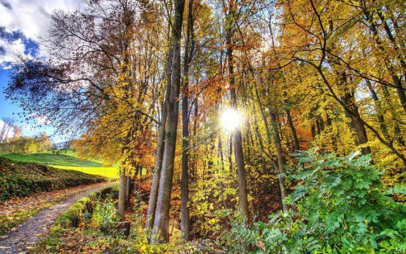 landscape nature tree forest woods autumn path wallpaper