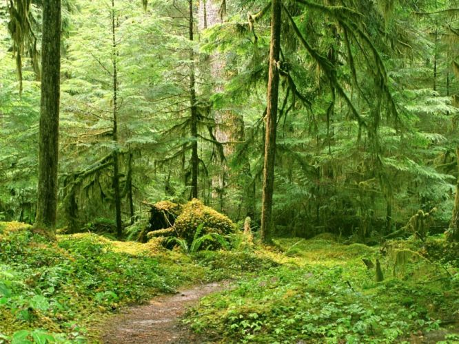 landscape nature tree forest woods path wallpaper