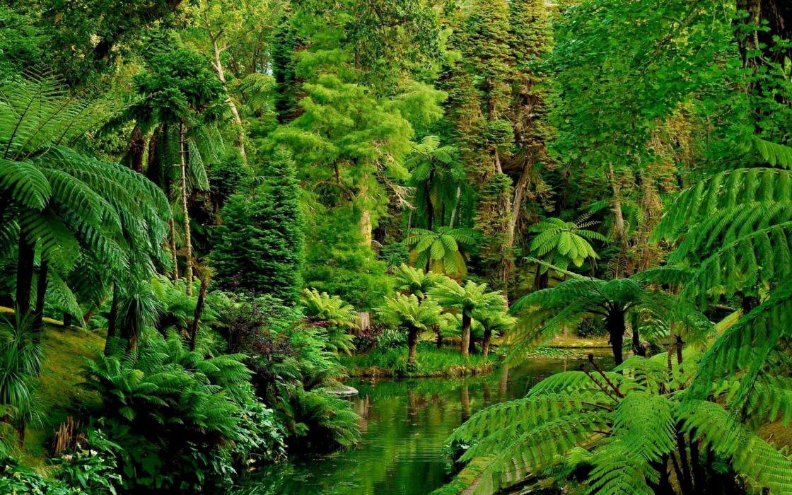 landscape nature tree forest woods jungle garden wallpaper