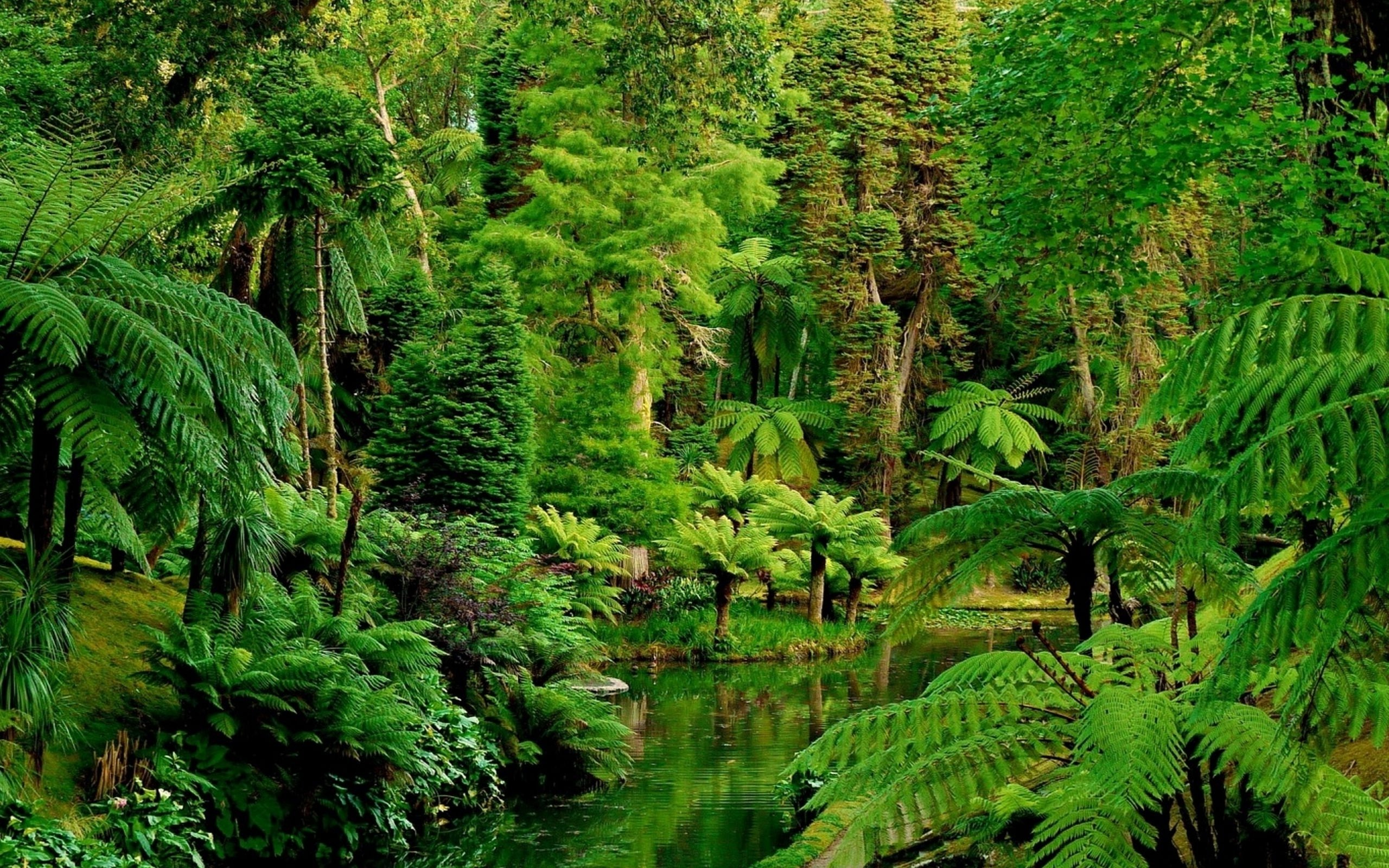 Forest: Deep Dense Green Jungle Earth Forest Wallpapers Landscape ...