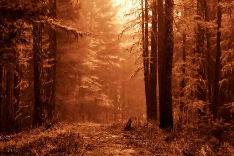 landscape nature tree forest woods sepia wallpaper