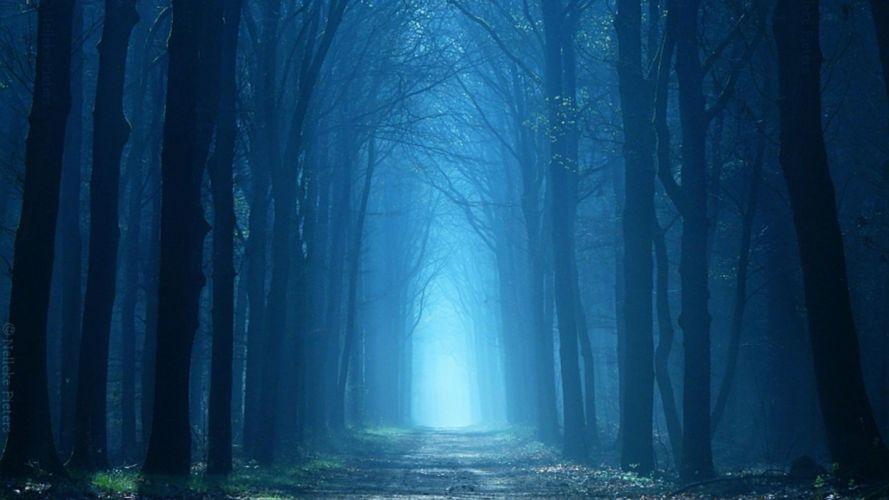 landscape nature tree forest woods fog road path wallpaper