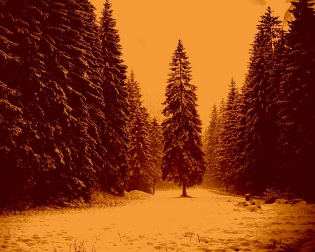 landscape nature tree forest woods sepia winter wallpaper