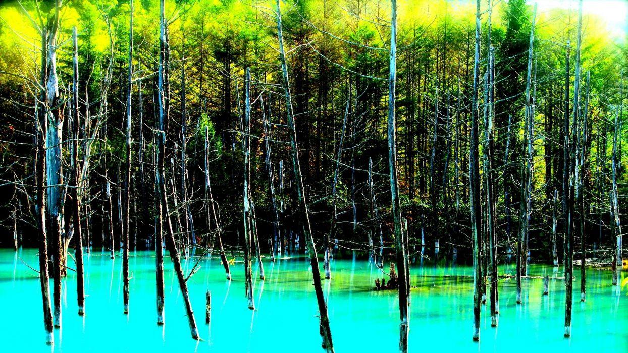 landscape nature tree forest woods swamp river lake jungle florida wallpaper